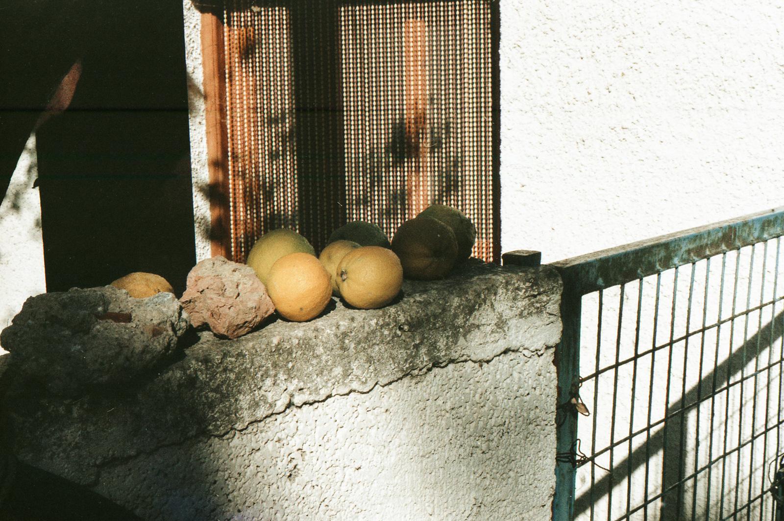 Lemons on the fence
